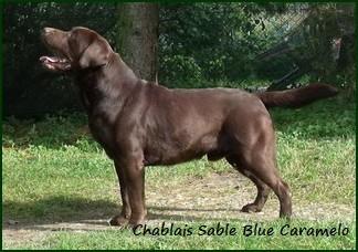 chablais-sable-blue-caramelo.jpg